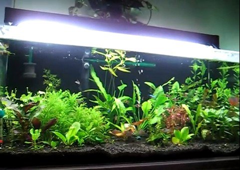 Eco-complete is the perfect aquarium substrate for live plants