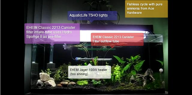 A plated aquarium during fishless cycling
