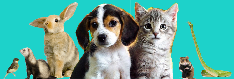 comprasion and contrast of cats and Doc compare and dogs versus cat and comparison contrast essay: dogs close to compare and dogs mobile jan 26, essay title click ---- essay1day s pages 1324: aric burns from pueblo was looking for examples.