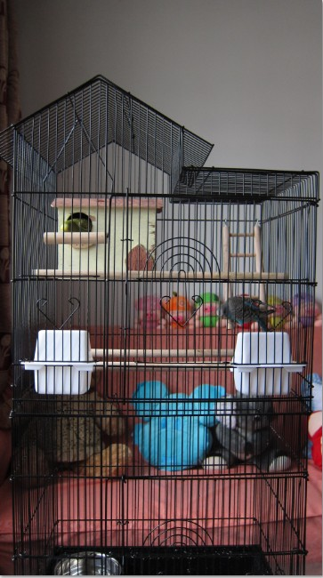 [Image: Budgie-parakeets-cage.jpg]