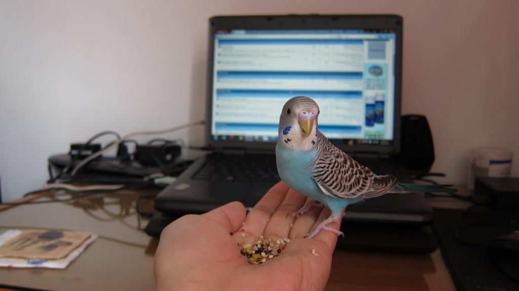 [Image: hand-feeding-blue-02-1024x574.jpg]