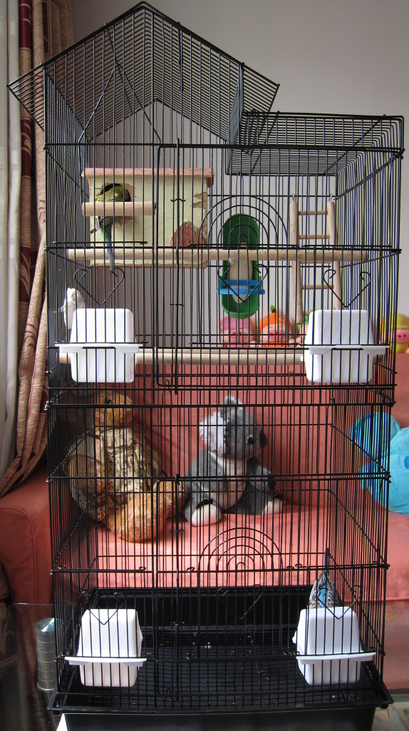 A basic budgie cage setup with perches, cups, mineral rock, cuttlebone, breeding nest