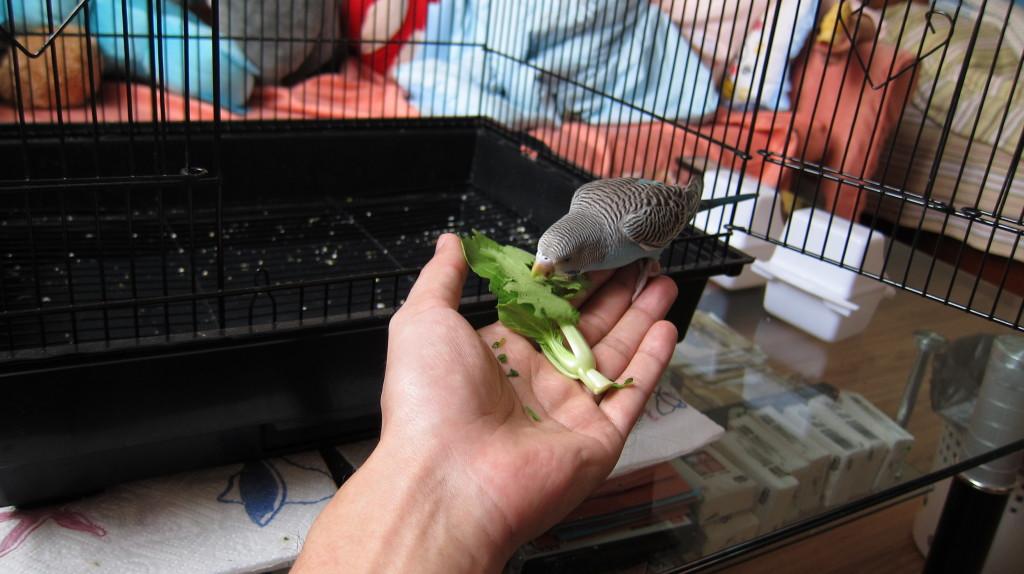 [Image: veggie-01-1024x574.jpg]
